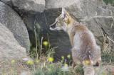Parc animalier de Pradinas